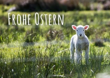 """Postkarte """"Osterlamm"""" (10er Pack)"""