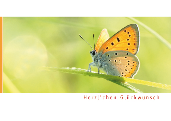 Postkarte Augenblicke der Besinnung – Glückwunsch Schmetterling