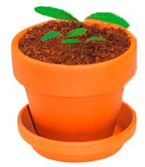 Pflanze deinen Baum! Set